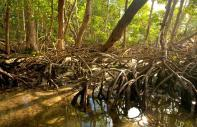 The mangrove in Biscayne National Park