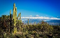 Saguaro National Monument cactuses