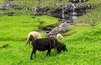 Hiking on Streymoy Island :  - Faroe Islands