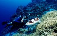 Undersea diving :  - Marshall Islands