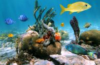 The under-water coral reefs of Cozumel Island.