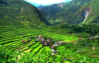 Banaue & Batad rice terraces