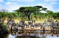 The National park of Serengeti