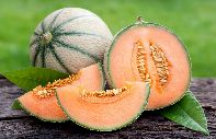 Cavaillon melon