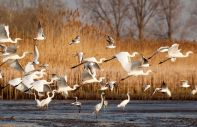 The birds of the Ebro Delta