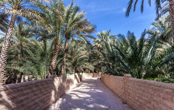 The Al-Ain Oasis, United Arab Emirates