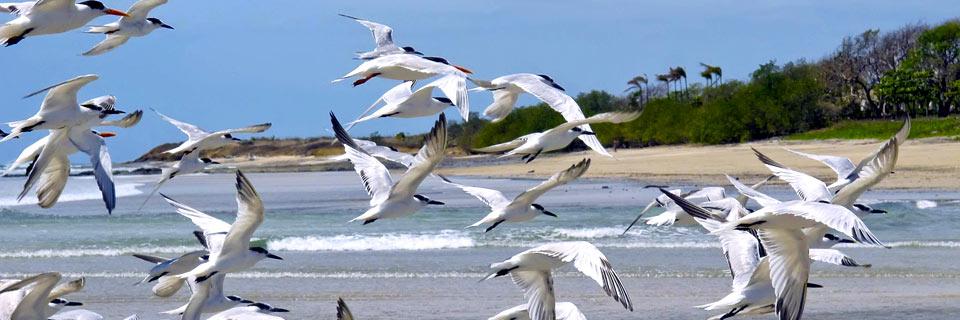 залив папагайо фото
