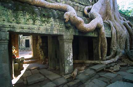 Ta Prohm and its roots