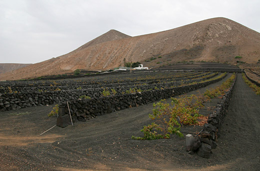 Exploring Lanzarote's wine region