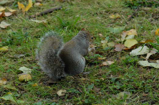 A Primrose Hill inhabitant