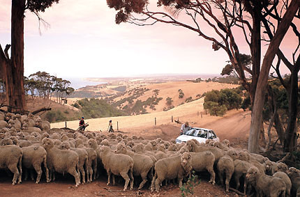 South Australia: escape to the other side of the world