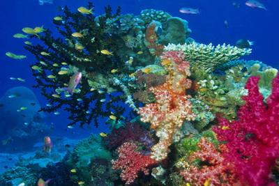 Nakia Resort And Dive Taveuni Island Fiji Real Green